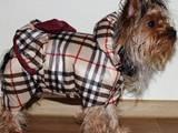 Собаки, щенята Аксесуари, ціна 150 Грн., Фото