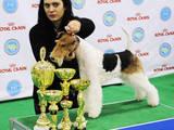 Собаки, щенки Занятия, тренировки, цена 400 Грн., Фото