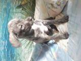 Собаки, щенята Різне, ціна 10 Грн., Фото