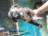Собаки, щенки Разное, цена 10 Грн., Фото