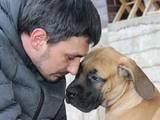 Собаки, щенята Південноафриканський Бурбуль, ціна 12000 Грн., Фото