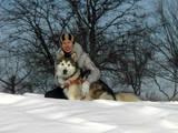 Собаки, щенки Аляскинский маламут, цена 100 Грн., Фото