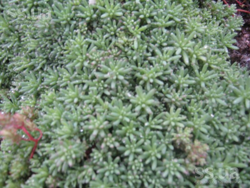 Домашні рослини садові рослини ціна 10