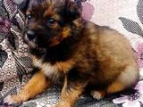 Собаки, щенки Беспородная, цена 2 Грн., Фото