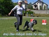 Собаки, щенята Міттельшнауцер, ціна 8000 Грн., Фото