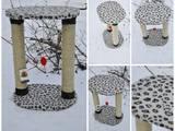 Кішки, кошенята Аксесуари, ціна 120 Грн., Фото