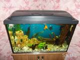 Рыбки, аквариумы Аквариумы и оборудование, Фото