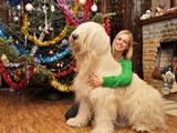 Собаки, щенята Південноросійська вівчарка, ціна 24000 Грн., Фото