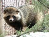 Животные Экзотические животные, цена 600 Грн., Фото