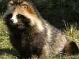 Тварини Екзотичні тварини, ціна 600 Грн., Фото
