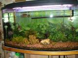 Рибки, акваріуми Акваріуми і устаткування, ціна 2500 Грн., Фото