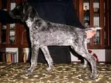 Собаки, щенки Разное, цена 3000 Грн., Фото