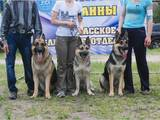 Собаки, щенята Східно-Європейська вівчарка, ціна 3500 Грн., Фото