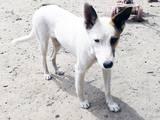 Собаки, щенки Неизвестная порода, цена 10 Грн., Фото