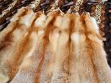 Животные Разное, цена 400 Грн., Фото