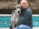Собаки, щенята Німецький дог, ціна 1 Грн., Фото