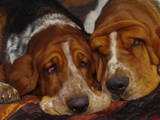 Собаки, щенята Бассет, ціна 3000 Грн., Фото