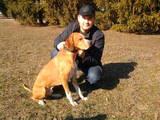 Собаки, щенята Англійський пойнтер, Фото