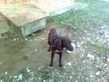 Собаки, щенята Невідома порода, ціна 1500 Грн., Фото