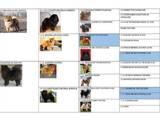 Собаки, щенки Чау-чау, цена 18000 Грн., Фото