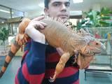 Животные Экзотические животные, цена 11500 Грн., Фото