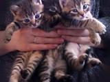Кошки, котята Разное, цена 5 Грн., Фото