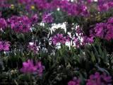 Грызуны Корм, цена 20 Грн., Фото