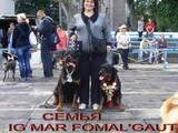 Собаки, щенята Ротвейлер, ціна 3000 Грн., Фото