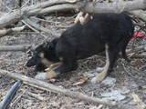 Собаки, щенки Неизвестная порода, Фото