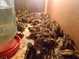 Попугаи и птицы Разное, цена 4 Грн., Фото