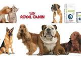 Собаки, щенята Корм, ціна 50 Грн., Фото