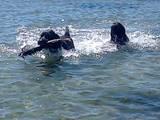 Собаки, щенки Разное, цена 4000 Грн., Фото