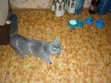 Кішки, кошенята Різне, ціна 1 Грн., Фото