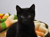 Кішки, кошенята Невідома порода, ціна 5 Грн., Фото