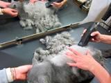 Кошки, котята Ветеринарные услуги, цена 120 Грн., Фото