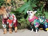 Собаки, щенки Аксессуары, цена 200 Грн., Фото