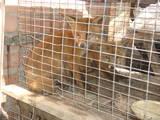 Тварини Різне, ціна 150 Грн., Фото