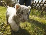 Животные Экзотические животные, цена 30000 Грн., Фото