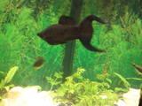 Рыбки, аквариумы Рыбки, цена 20 Грн., Фото