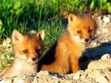 Животные Экзотические животные, Фото