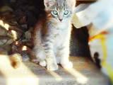 Кішки, кошенята Різне, ціна 50 Грн., Фото