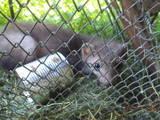 Животные Разное, цена 1000 Грн., Фото