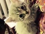 Кошки, котята Неизвестная порода, цена 200 Грн., Фото
