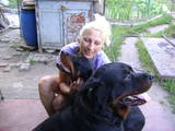 Собаки, щенята Ротвейлер, ціна 1500 Грн., Фото