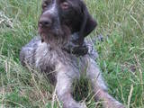 Собаки, щенки Разное, цена 700 Грн., Фото