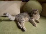Кішки, кошенята Невідома порода, ціна 2 Грн., Фото