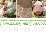 Животные Разное, цена 8 Грн., Фото