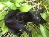 Кішки, кошенята Невідома порода, ціна 0 Грн., Фото