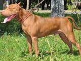 Собаки, щенята Невідома порода, ціна 4000 Грн., Фото