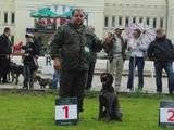 Собаки, щенята Різне, ціна 2000 Грн., Фото